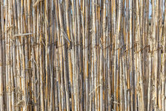 Fence of young bamboo Royalty Free Stock Photography