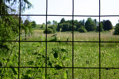 Fenced in. Summer landscape as seen through a fence royalty free stock photography