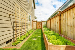 Fenced backyard with garden bed Stock Photo
