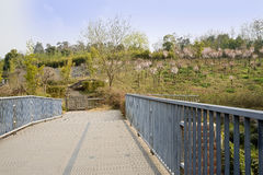 Fenced footbridge before blossoming hillside in sunny spring Stock Images