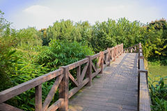 Fenced footbridge over water in verdant plants on sunny day Stock Photos