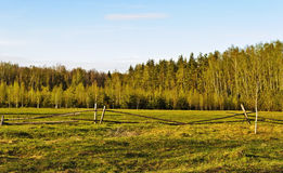 Fenced green pasture in a forest Stock Image