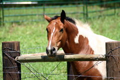 Fenced Horse. A photograph taken in Oklahoma stock images