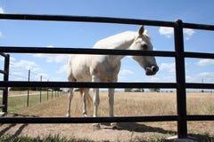 Fenced In Horse Stock Photos