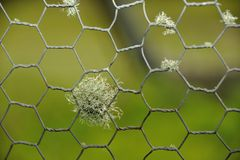 Fenced In. Moss growing on a fence with a green background Royalty Free Stock Photography