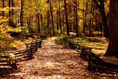 Fenced Path Through Autumn Woods Stock Photos
