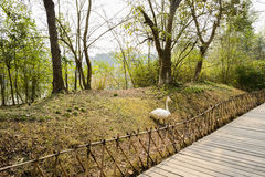 Fenced path paved with planks in spring Stock Photos