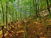 Fenced path wood. Fenced path in the wood Royalty Free Stock Photo