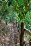 Fenced path in the woods Royalty Free Stock Images