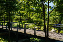Fenced and planked footbridge in trees on sunny summer day Royalty Free Stock Photo
