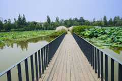 Fenced planked path in lotus pond on sunny day Stock Image