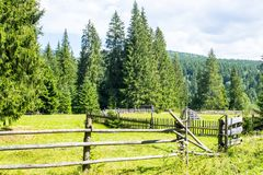 Fenced plot near the forest. Fenced plot near the spruce forest of ukrainian villagers in Carpathian Mountains Stock Images