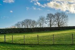 A fenced rural field with a row of trees on the horizon Royalty Free Stock Photo