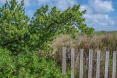 Fenced Vegetation on the Florida Coast3 Royalty Free Stock Photography