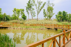 Fenced wooden footbridge over lake of sunny spring Stock Image