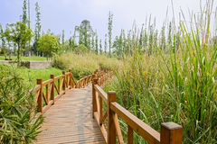 Fenced wooden footbridge in reeds on sunny spring day Royalty Free Stock Images