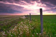 Fenceline. A late day farmland scene featuring a barbed wire fence extending into the horizon stock image
