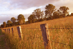 Fenceline Stock Foto