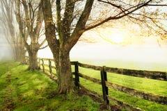 Fenceline en Bomen Royalty-vrije Stock Afbeelding