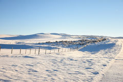 Fenceline In Winter. Snowy Landscape Country Scene Stock Images