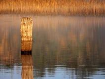 Fencepost y lago viejos en el amanecer Imagen de archivo
