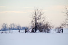 Fencerow in Winter Scene Stock Images