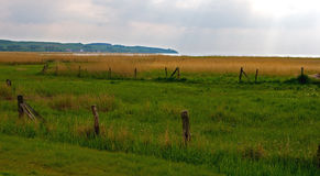 Fences. Grassland with fences Royalty Free Stock Image
