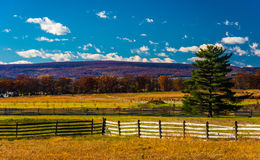 Fences and pine tree in a field in Gettysburg, Pennsylvania. Stock Photo