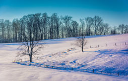 Fences and trees on a snow covered hill in rural York County, Pe Royalty Free Stock Image