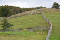 fencing zdjęcia stock