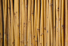 Fencing bamboo panel Stock Images