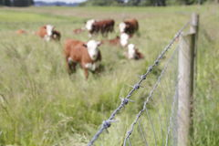 Fencing for Livestock. A post and barbed wire fence is used to keep livestock safely contained Stock Image
