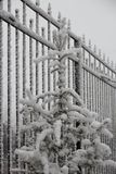 Fencing from metal, a fur-tree under snow, frosty cloudy day. Fencing from the metal, covered with hoarfrost, a fur-tree under snow, frosty cloudy day Royalty Free Stock Image