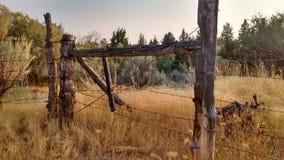 Desert cow pasture Central Oregon royalty free stock photos