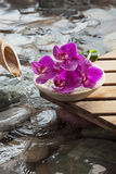 Feng shui atmosphere with soothing water. Water drops on beautiful orchids royalty free stock photo
