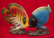 Feng Shui Fish royalty free stock photo