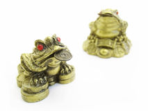Feng shui frogs. On the white background, macro Stock Photos