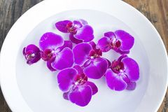 Feng Shui, Orchids in a Bowl with Water Stock Photography