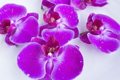 Feng Shui, Orchids in a Bowl with Water Stock Photo