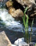Feng Shui stenarna i vattnet Royaltyfri Foto