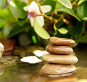 Feng Shui, the stones in the water. Source and flowers Stock Photography