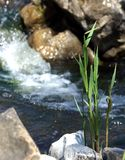 Feng Shui, the stones in the water. Source and flowers royalty free stock photo