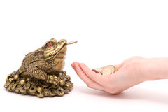 Feng shui toad give a money Stock Photo