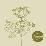 Fenhel Stock Image
