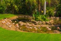 Fenicotteri in Loro Parque Fotografia Stock