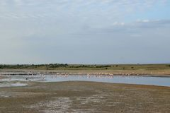Fenicotteri nel lago Magadi fotografie stock