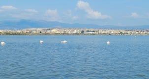 Fenicotteri rosa che mangiano, davanti alla città di Cagliari, la Sardegna, Italia stock footage