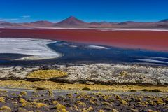 Fenicotteri rosa a Laguna Colorada Altiplano Bolivia immagine stock