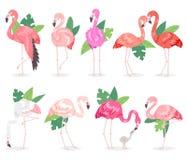 Fenicotteri rosa tropicali di vettore del fenicottero ed uccello esotico con l'insieme dell'illustrazione delle foglie di palma d illustrazione di stock
