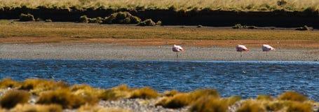 Fenicotteri sul vento fotografie stock libere da diritti